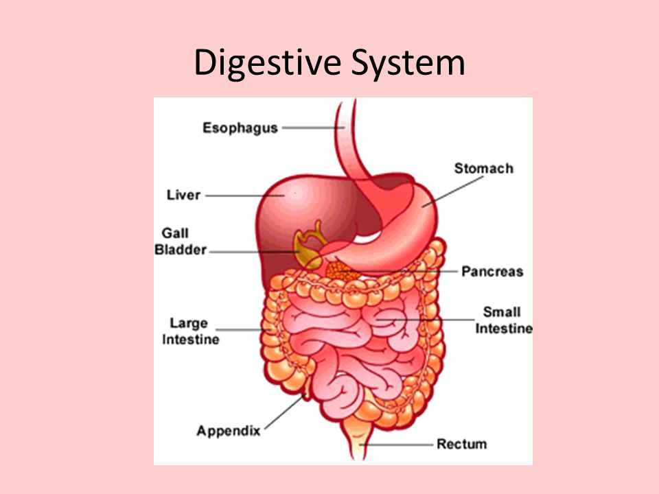 10 digestive system