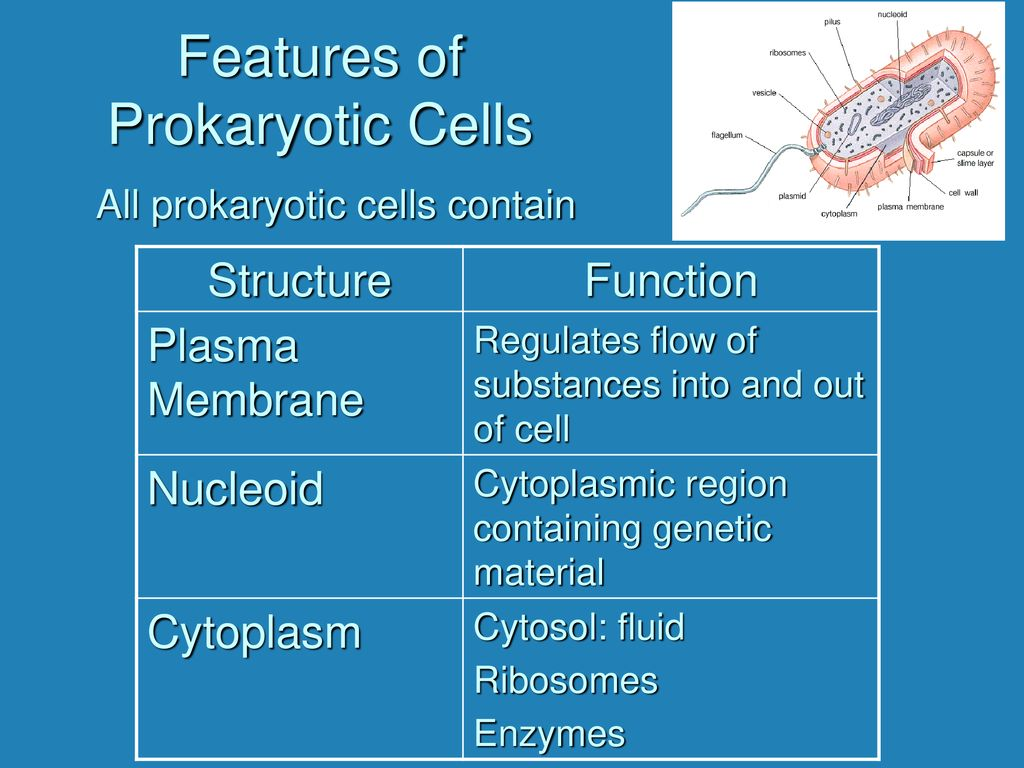 Structure And Function Ppt Download Fimbriae Prokaryotic Cell Edition Features Of Cells