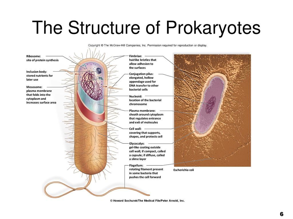 Cell Structure And Function Ppt Download Fimbriae Prokaryotic Edition The Of Prokaryotes