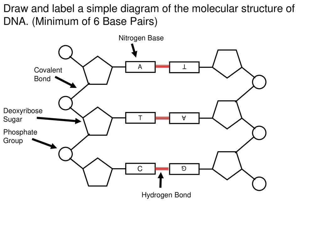 Notes Dna Structure Topic Ppt Download