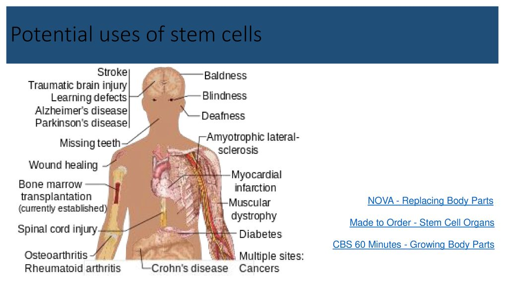 Cell Growth - Differentiation & Specialization - ppt download