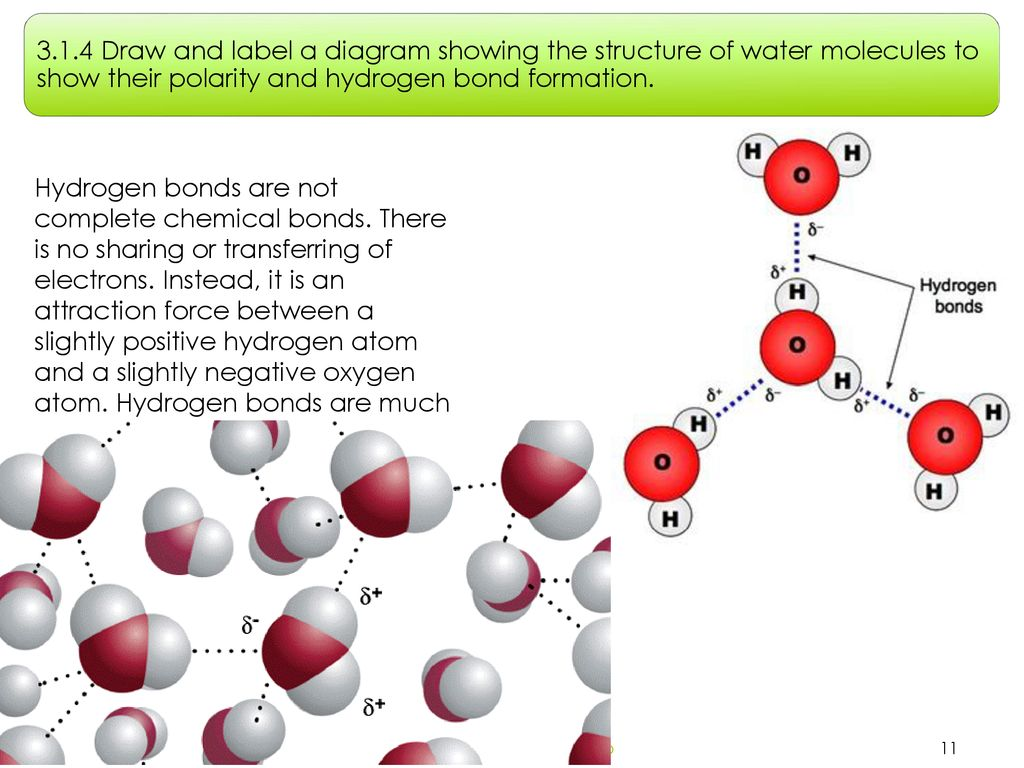 Topic 3: The chemistry of life - ppt download
