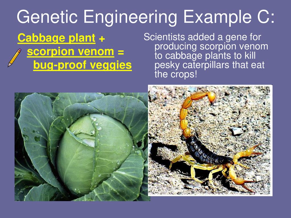 Cloning, Genetic Engineering, and Selective Breeding - ppt
