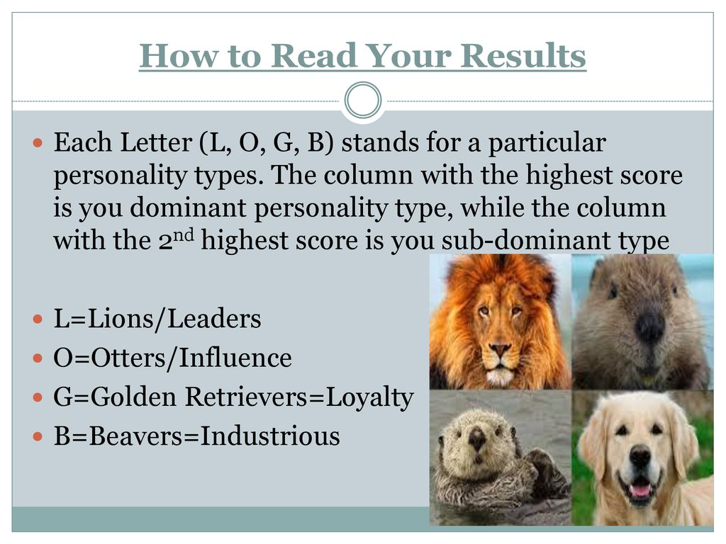 Personality Test Lion Otter Golden Retriever Personality Plus