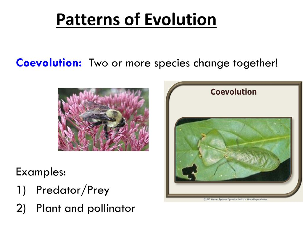 Eeob 400: lecture 15 coevolution. Ppt video online download.