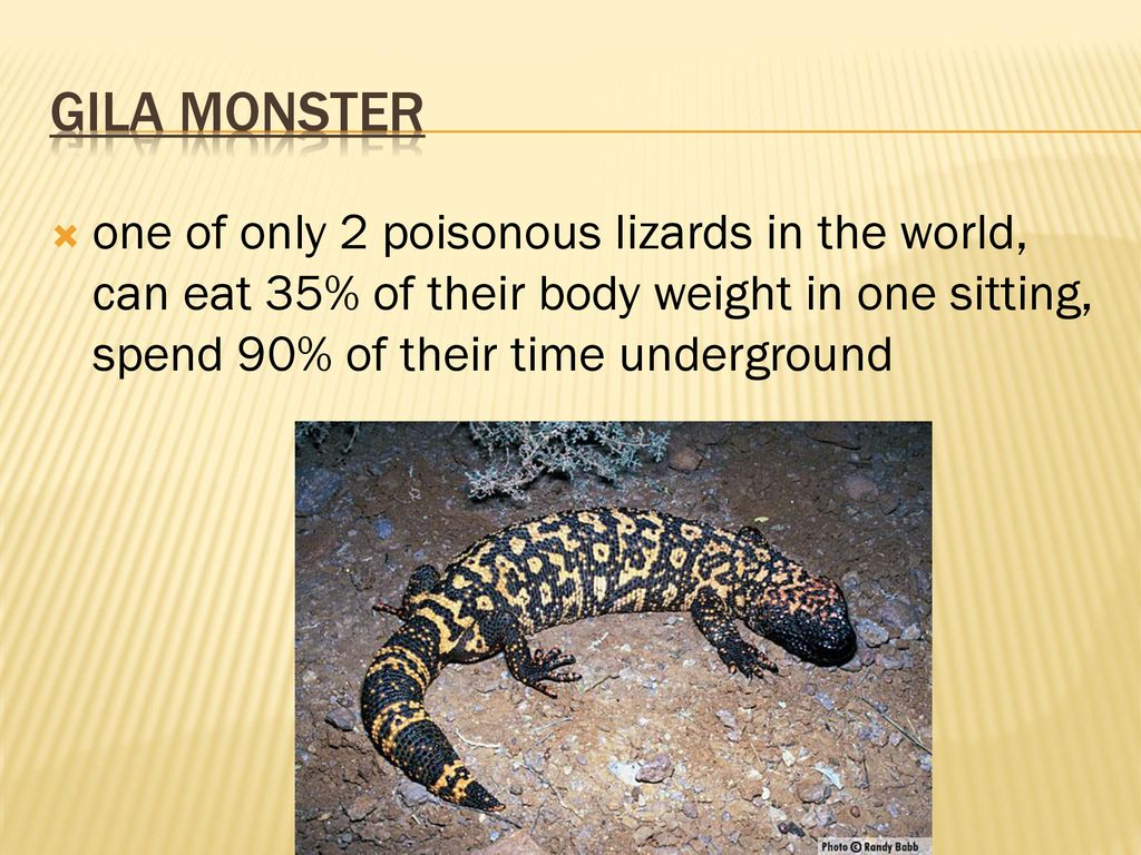 4 Gila Monster One Of Only 2 Poisonous