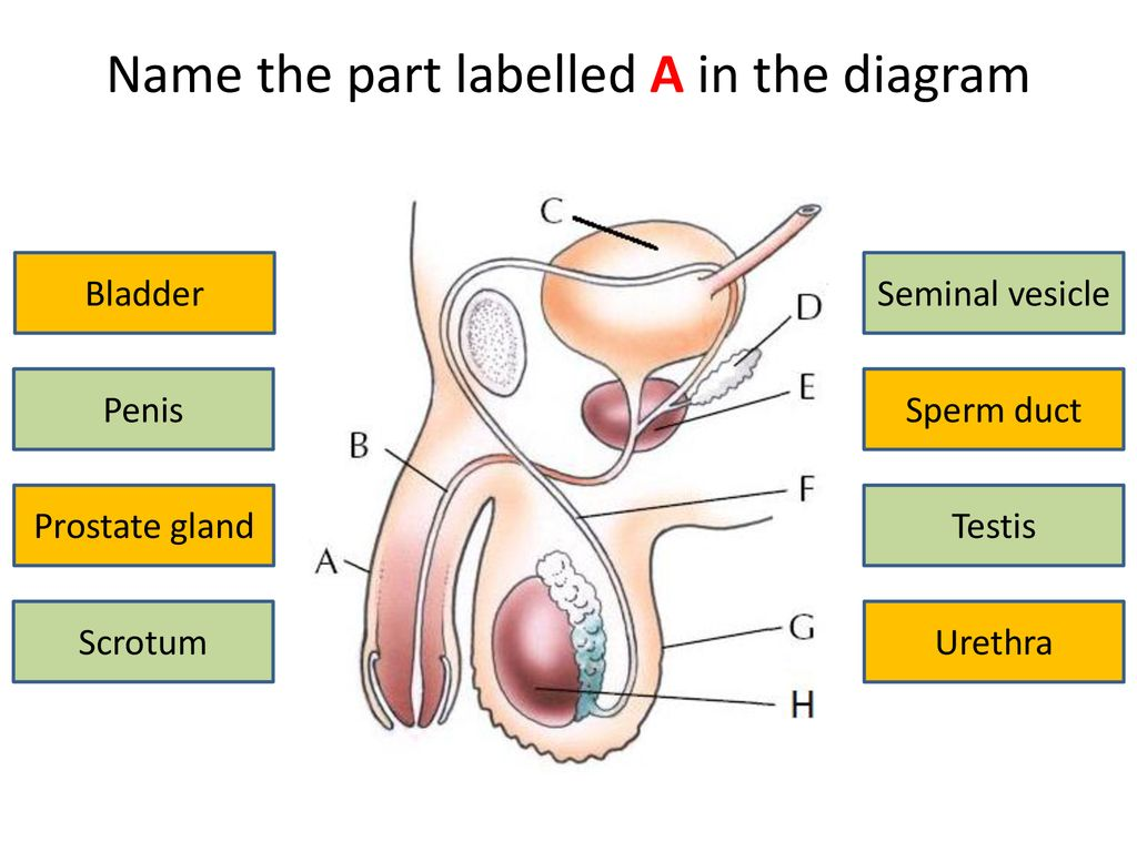 name the part labelled a in the diagram