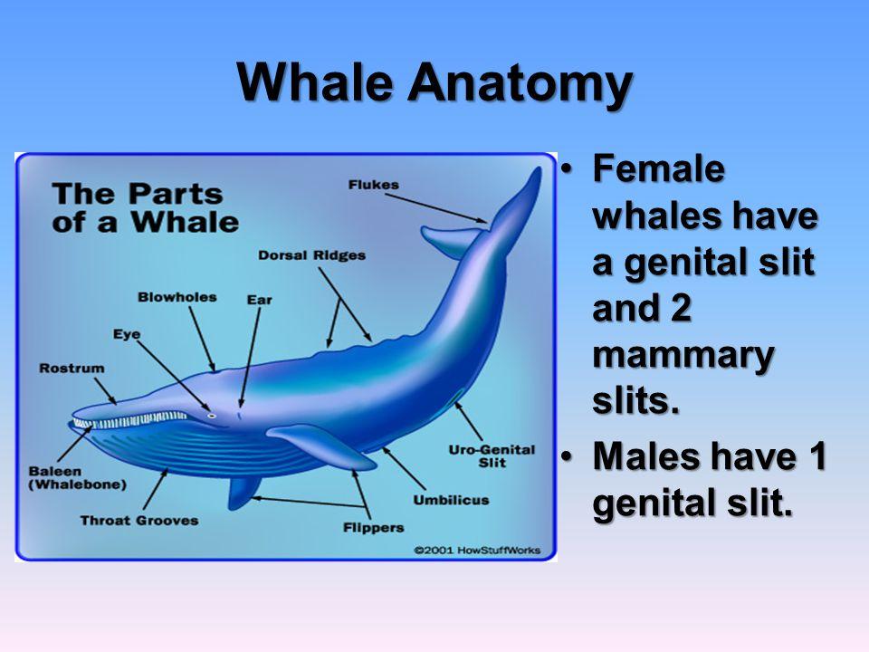 Marine Mammals. - ppt video online download