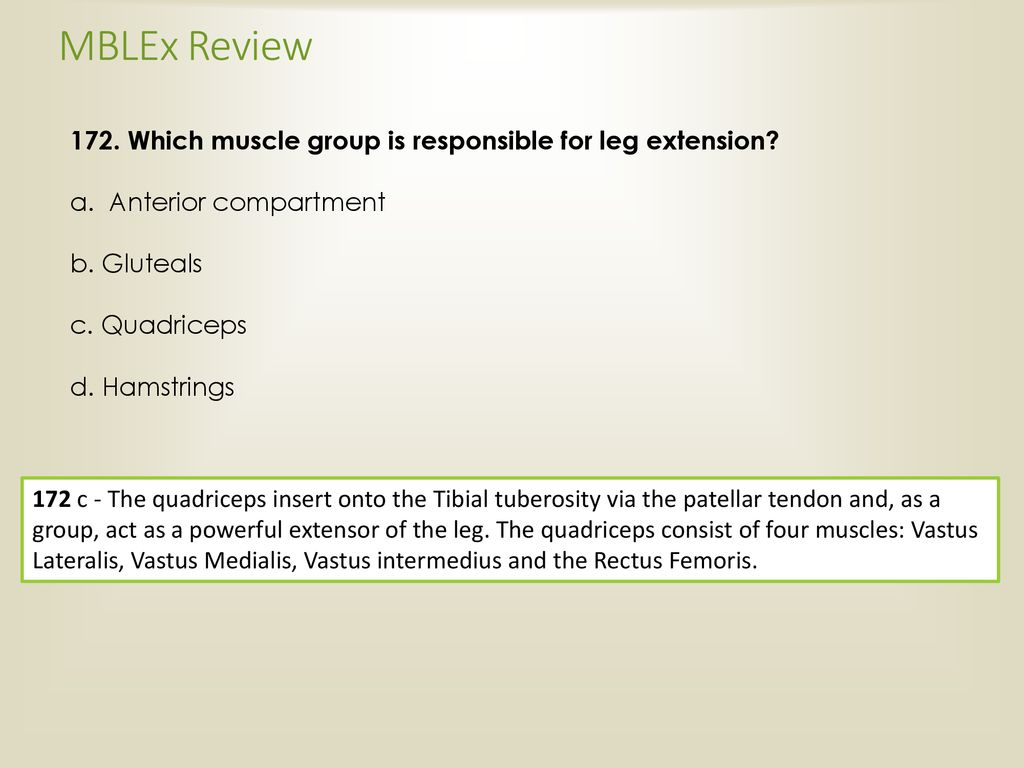 MBLEx Review 172. Which muscle group is responsible for leg extension