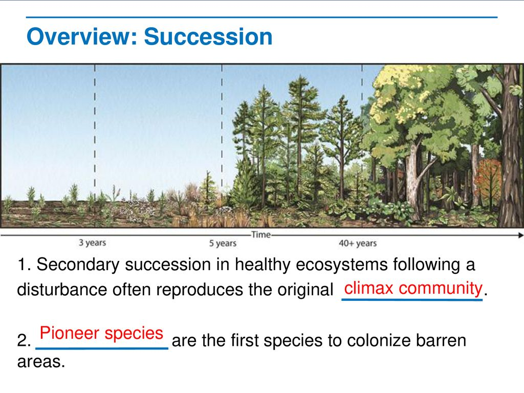 Overview%3A+Succession+Ask%3A+Does+this+diagram+represent+secondary+succession+or+primary+succession+Answer%3A+secondary+succession. succession read the lessons title aloud ppt download