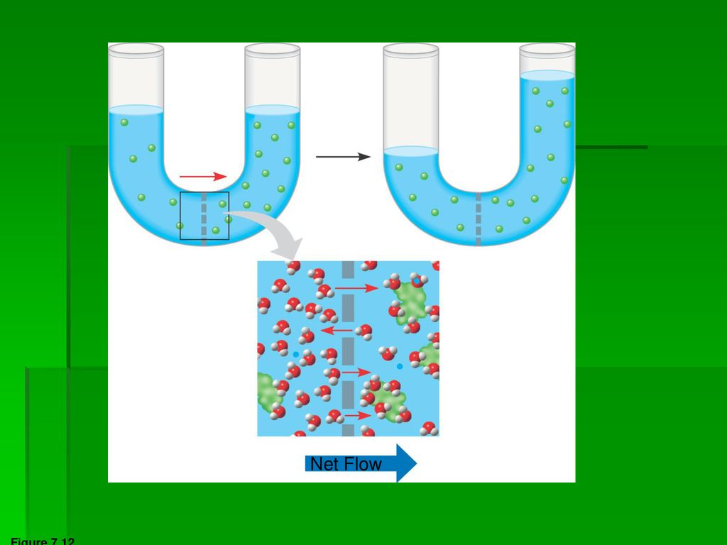 Membrane Structure And Function Ppt Download