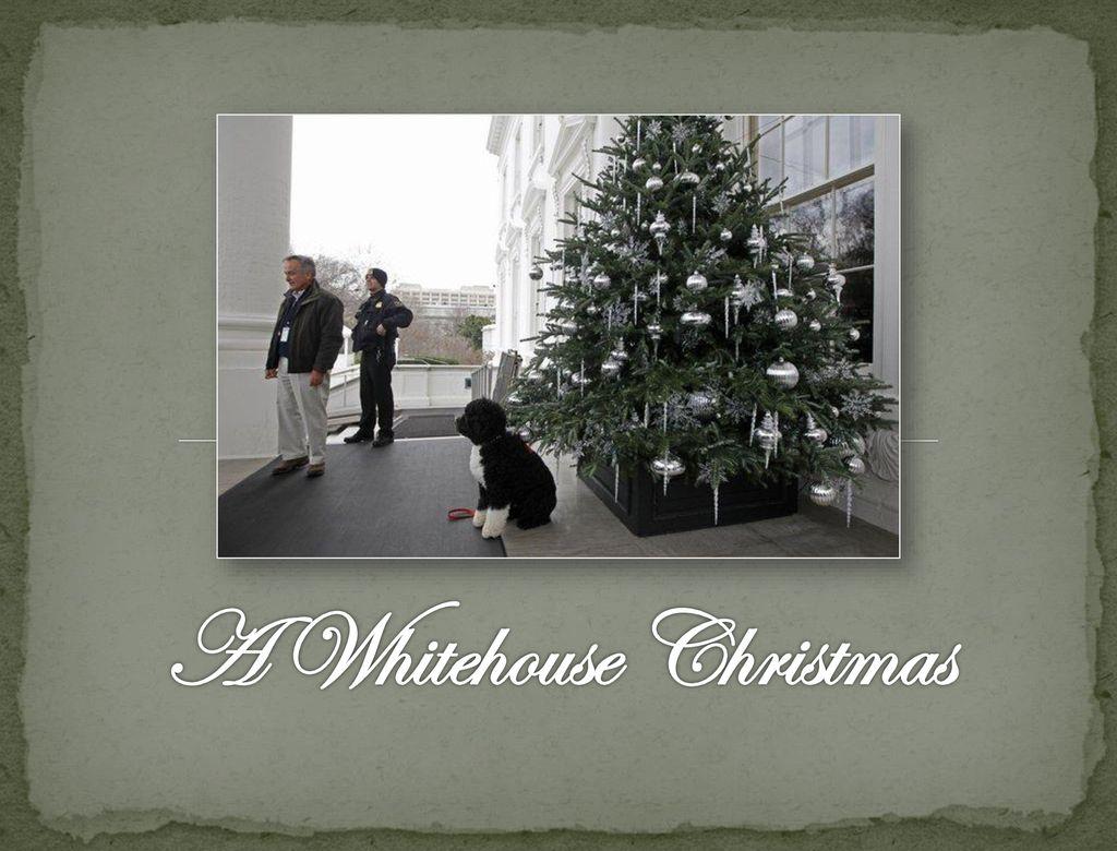 Whitehouse Christmas.A Whitehouse Christmas Ppt Download