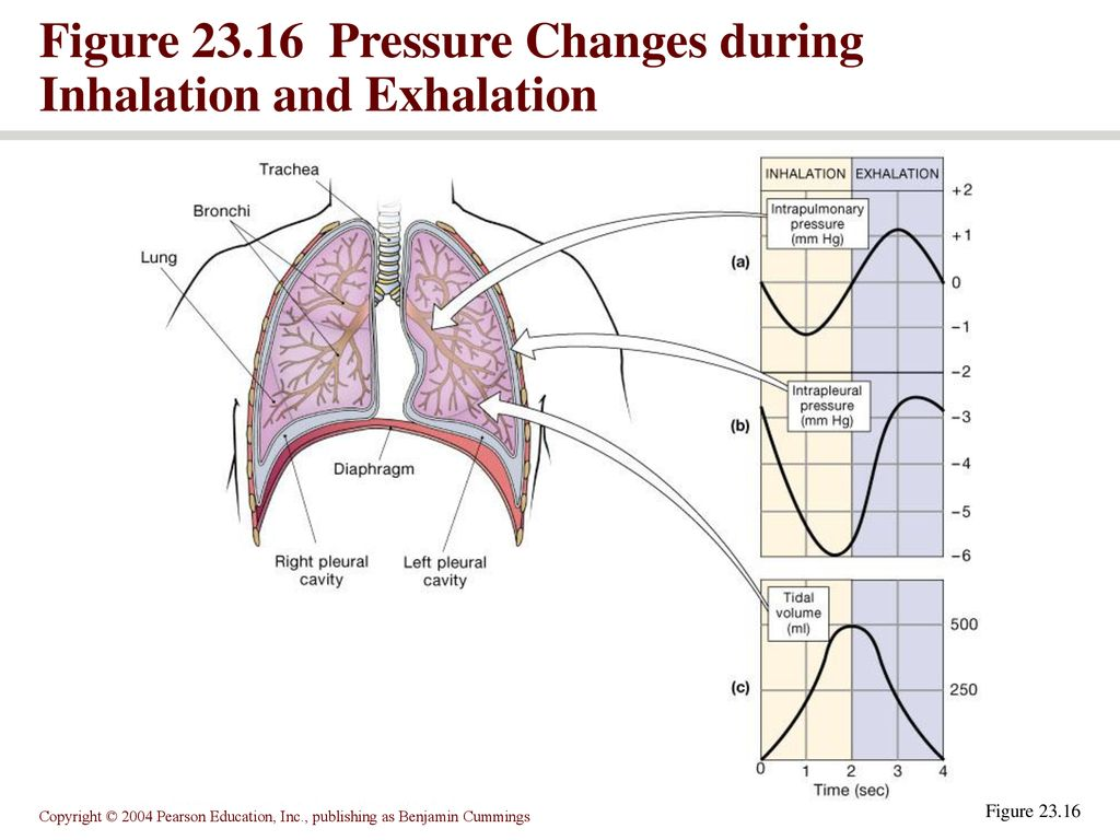 The Respiratory System Ppt Download Inhalation And Exhalation Diagram 10 Figure