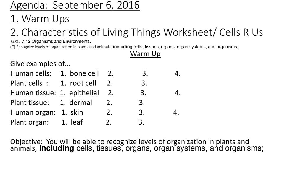 Agenda September 1 Set Up New Table Of Contents Cells 2 Ppt