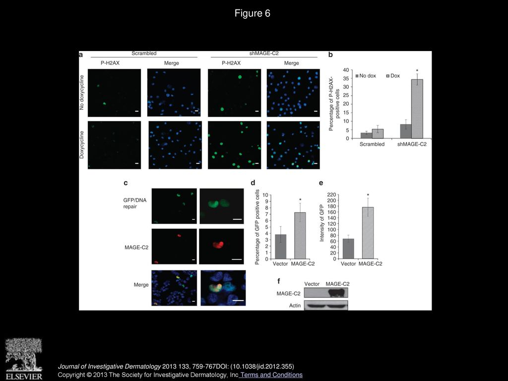 MAGE-C2 Promotes Growth and Tumorigenicity of Melanoma Cells