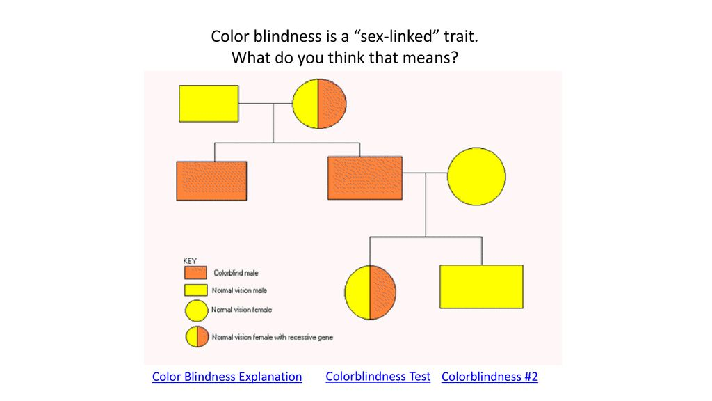 Color blindness sex linked dick jobs