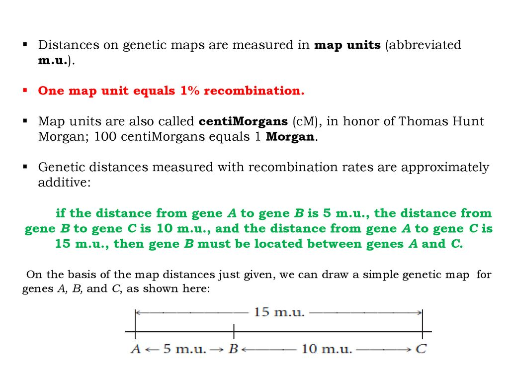 Linkage, Recombination, and Eukaryotic Gene Mapping - ppt ... on test cross, gene mapping activity, pedigree chart, monohybrid cross, wild type, punnett square, chromosome map units, dihybrid cross, reciprocal cross, map scale equivalent units, genetic screen,