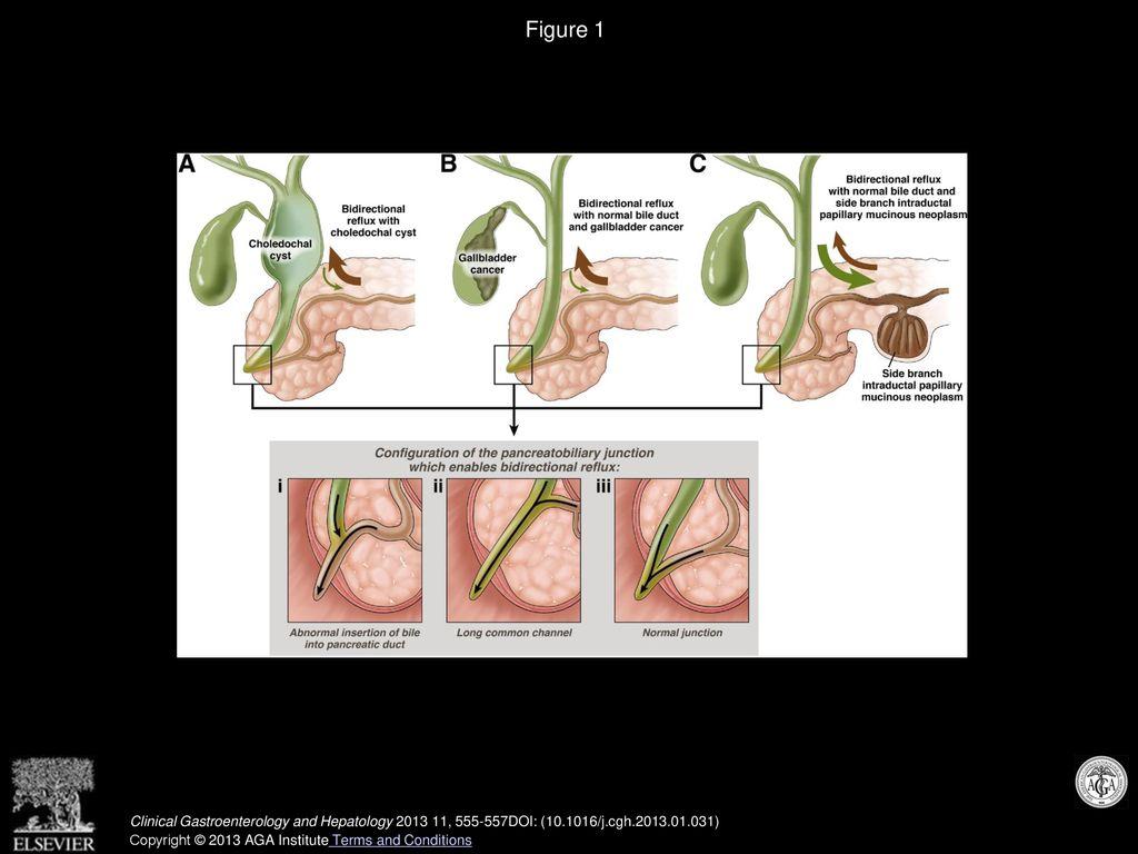 James L  Buxbaum, MD Clinical Gastroenterology and