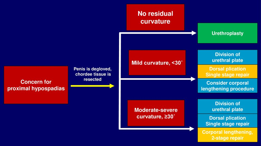 Management of Penile Curvature (Chordee) at CHOP - ppt download