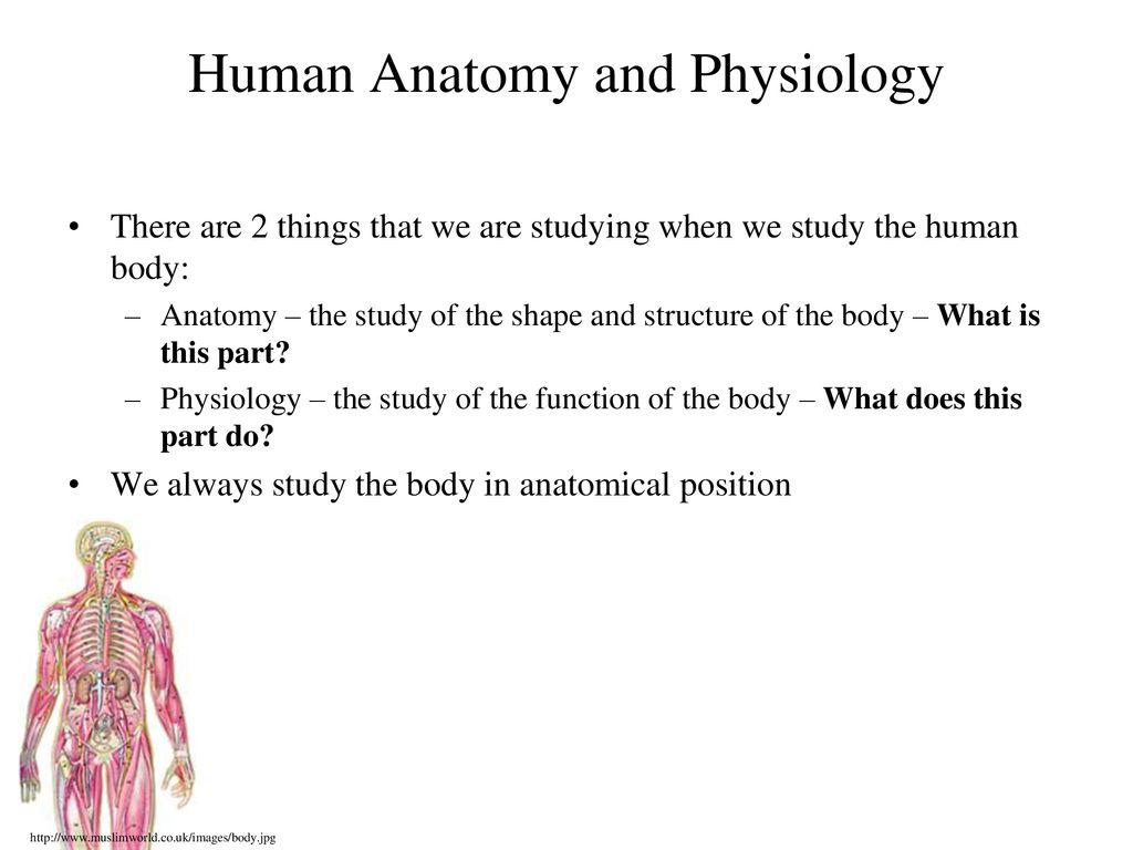 What Is A Human Humans Are Similar To Animals In Many Ways Ppt