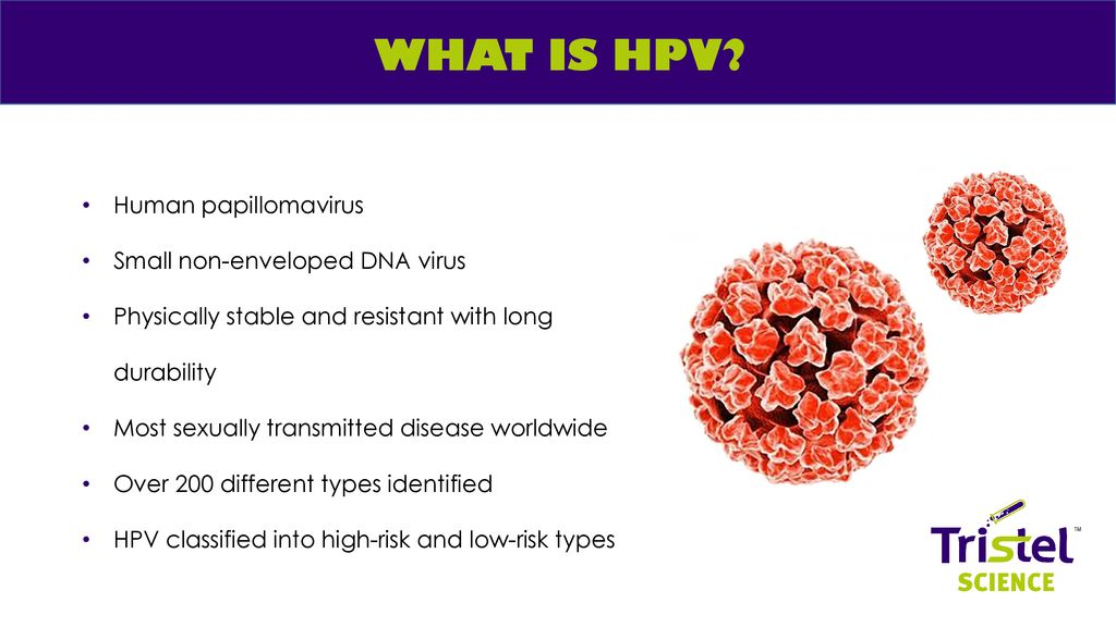 human papillomavirus hpv disinfection