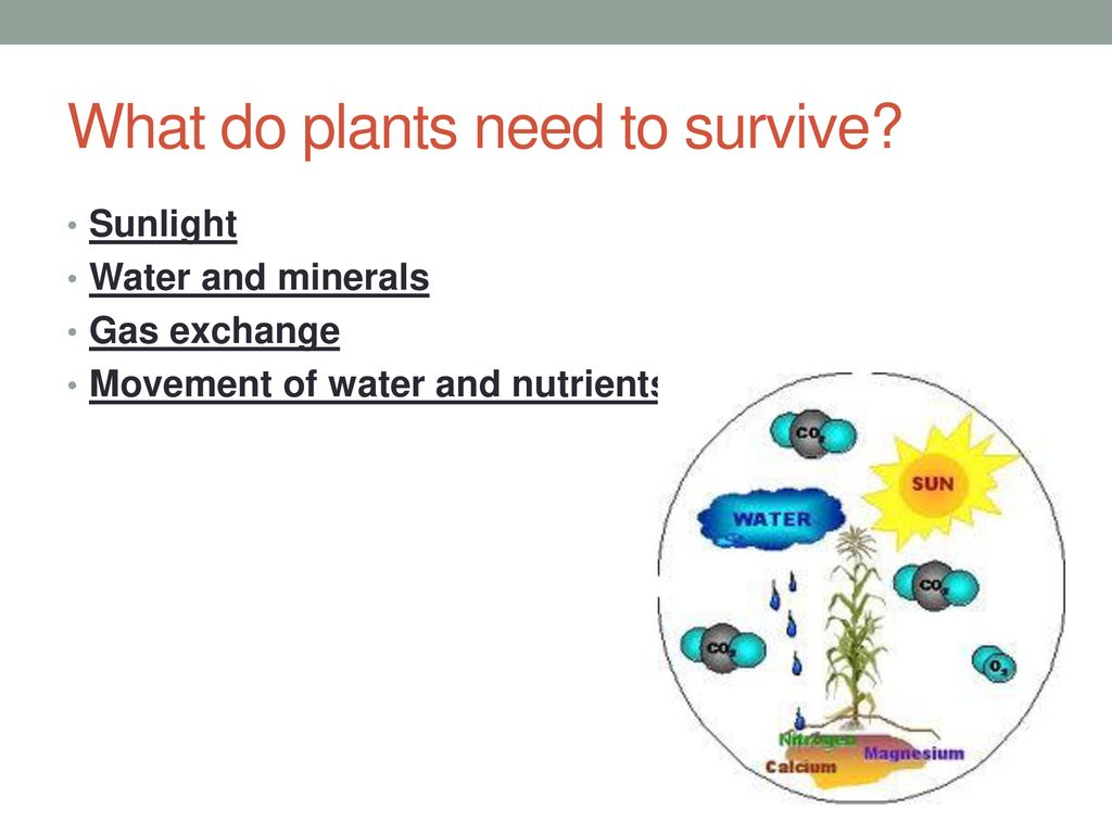 what do plants need to survive