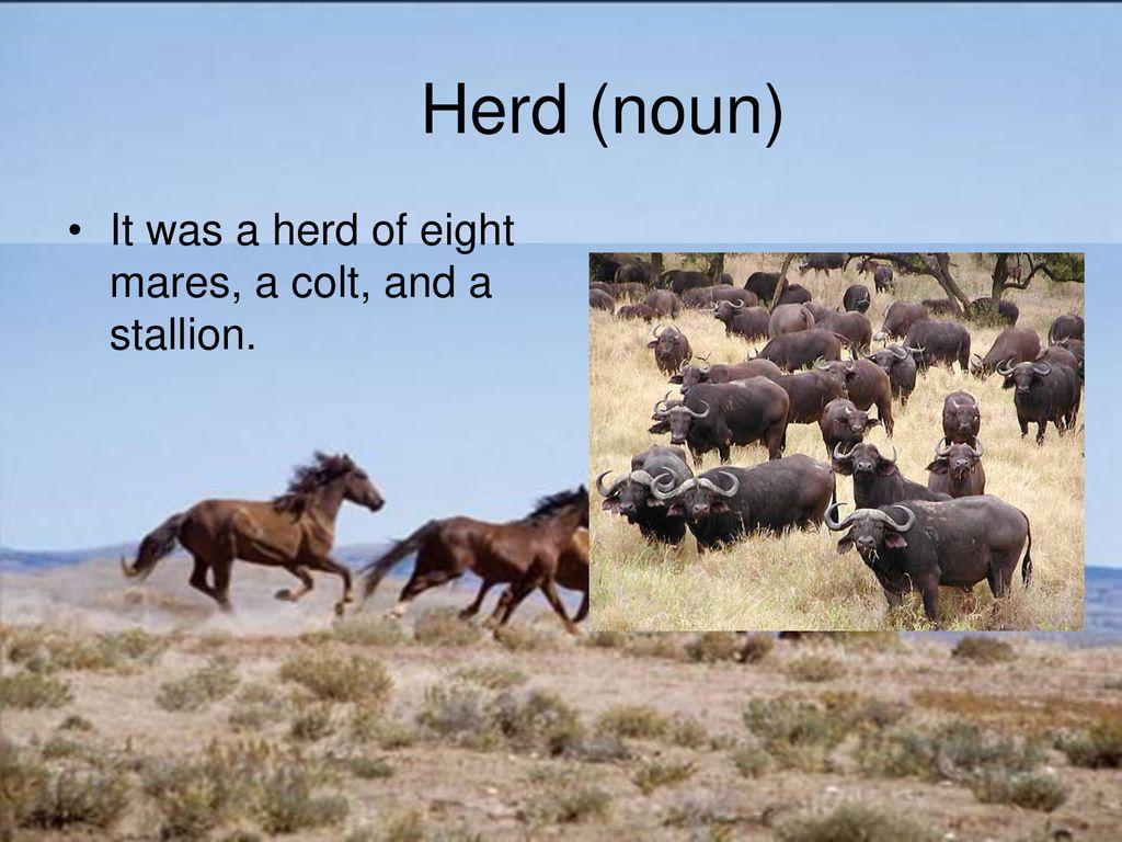 Black Cowboy Wild Horses Ppt Download
