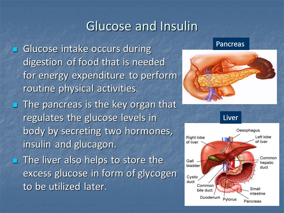 Glucose and Insulin Pancreas.