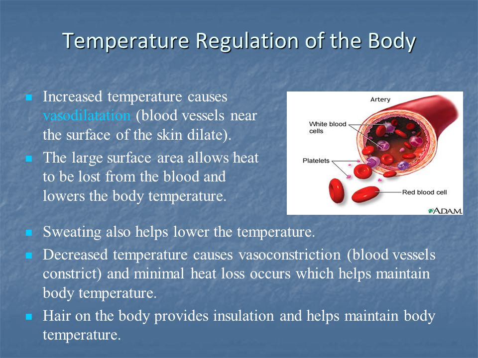 Temperature Regulation of the Body