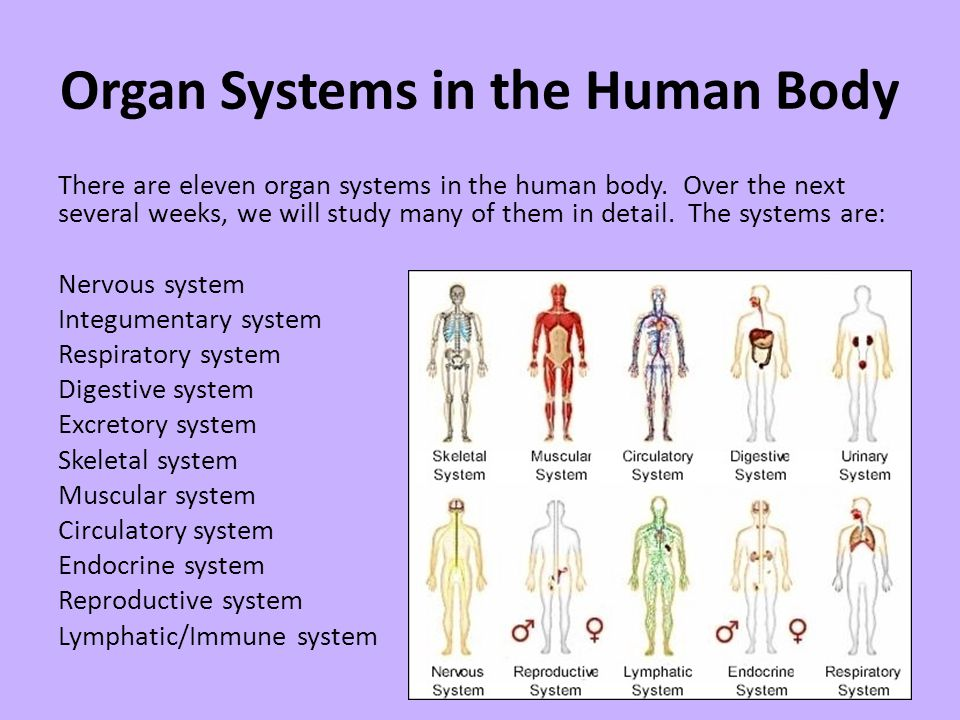 The Human Body Organ Systems And Homeostasis Ppt Video Online