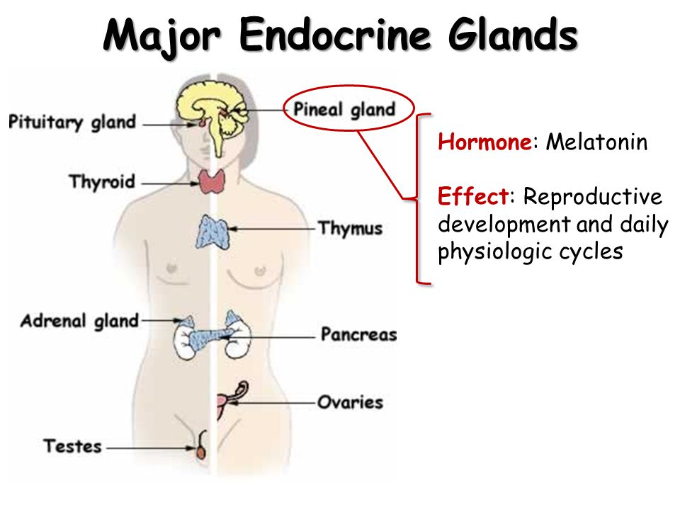 The Human Endocrine System Ppt Video Online Download