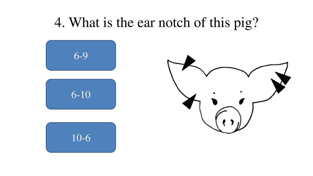 National Junior Swine Association Skillathon Resource - ppt
