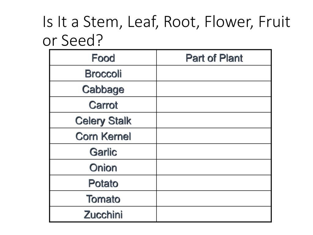 Plant Structure And Function Ppt Download Corn Seed Diagram Kernel Garlic Onion Potato Tomato Zucchini Is It A Stem Leaf Root Flower Fruit Or