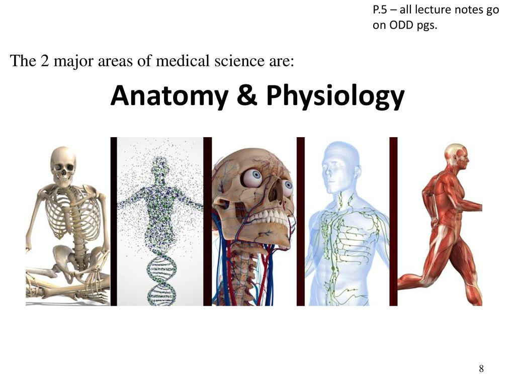 Chapter 1 Introduction to Human Anatomy and Physiology - ppt
