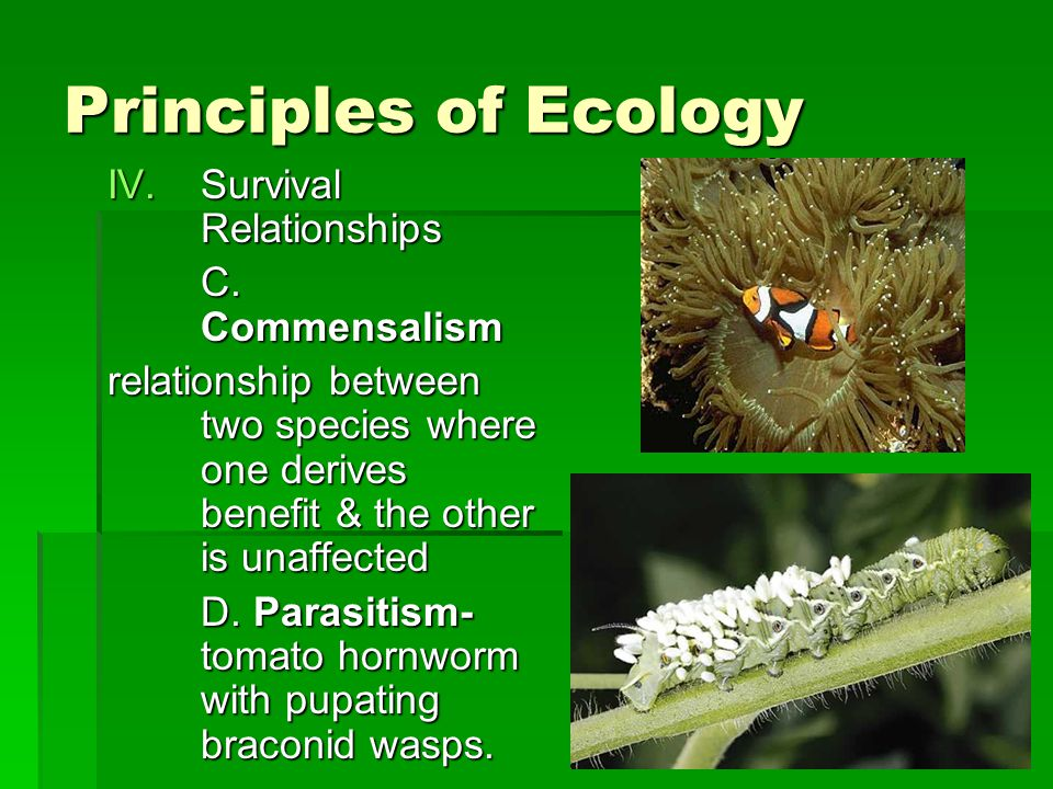 Principles of Ecology Survival Relationships C. Commensalism