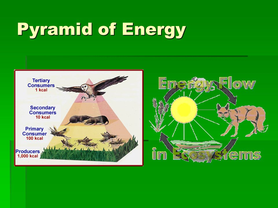 Pyramid of Energy