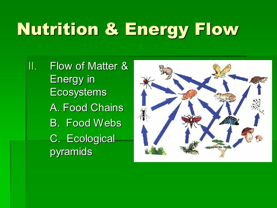 Nutrition & Energy Flow