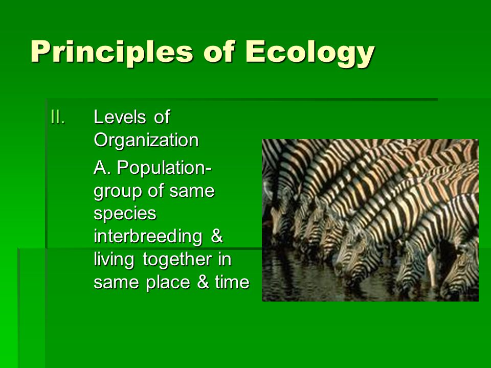 Principles of Ecology Levels of Organization