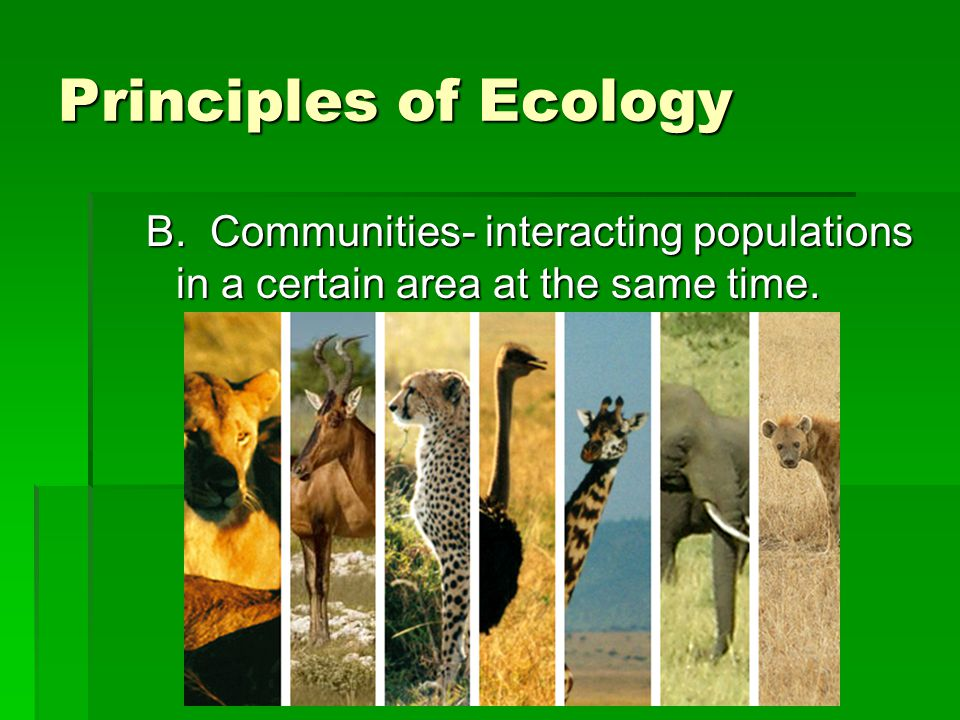 Principles of Ecology B. Communities- interacting populations in a certain area at the same time.
