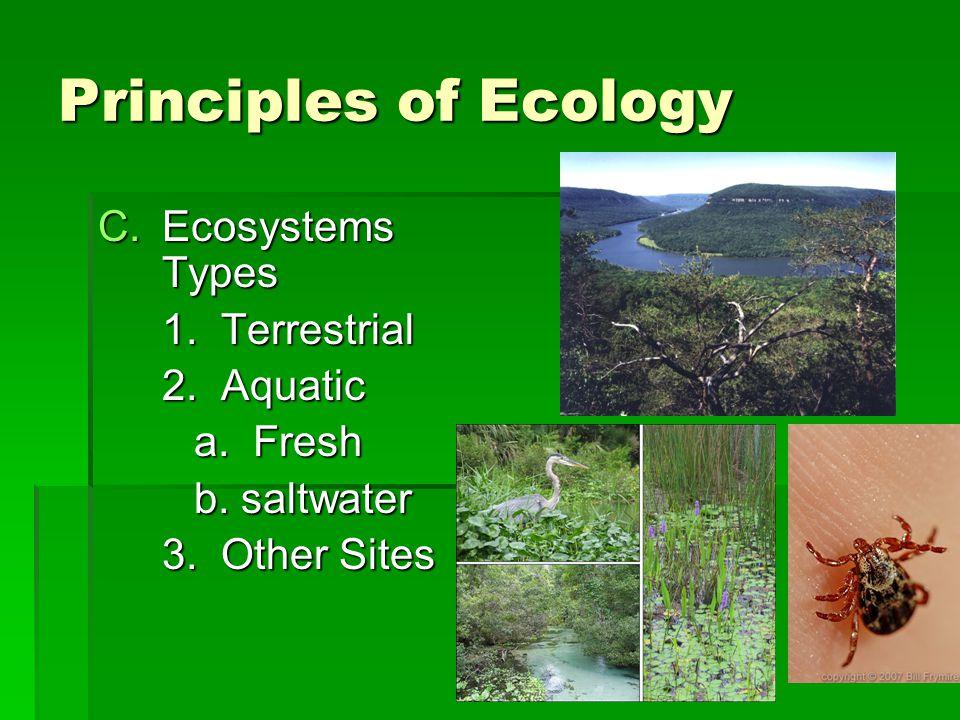 Principles of Ecology Ecosystems Types 1. Terrestrial 2. Aquatic