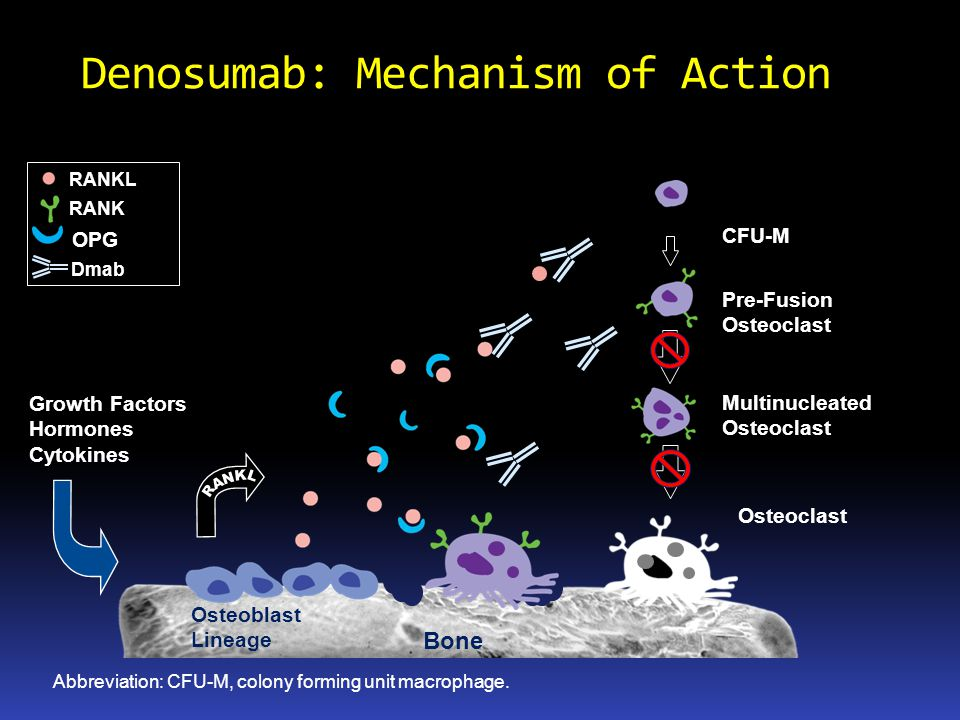 Denosumab: Mechanism of Action
