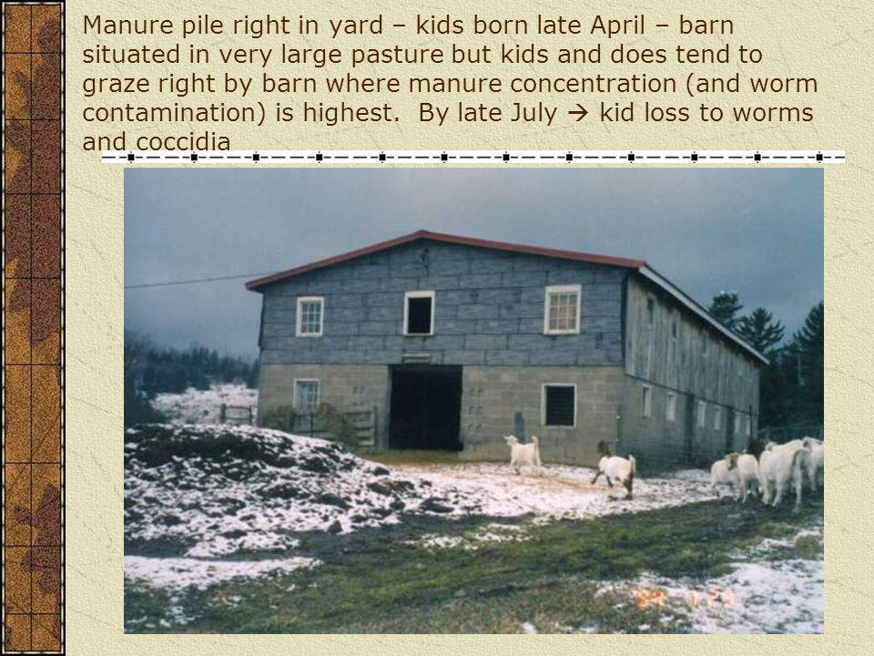 Manure pile right in yard – kids born late April – barn situated in very large pasture but kids and does tend to graze right by barn where manure concentration (and worm contamination) is highest.