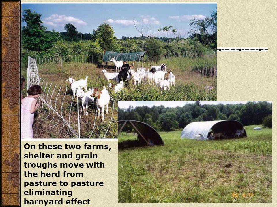 On these two farms, shelter and grain troughs move with the herd from pasture to pasture eliminating barnyard effect