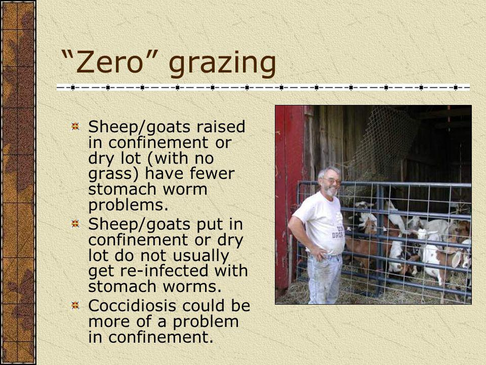 Zero grazing Sheep/goats raised in confinement or dry lot (with no grass) have fewer stomach worm problems.