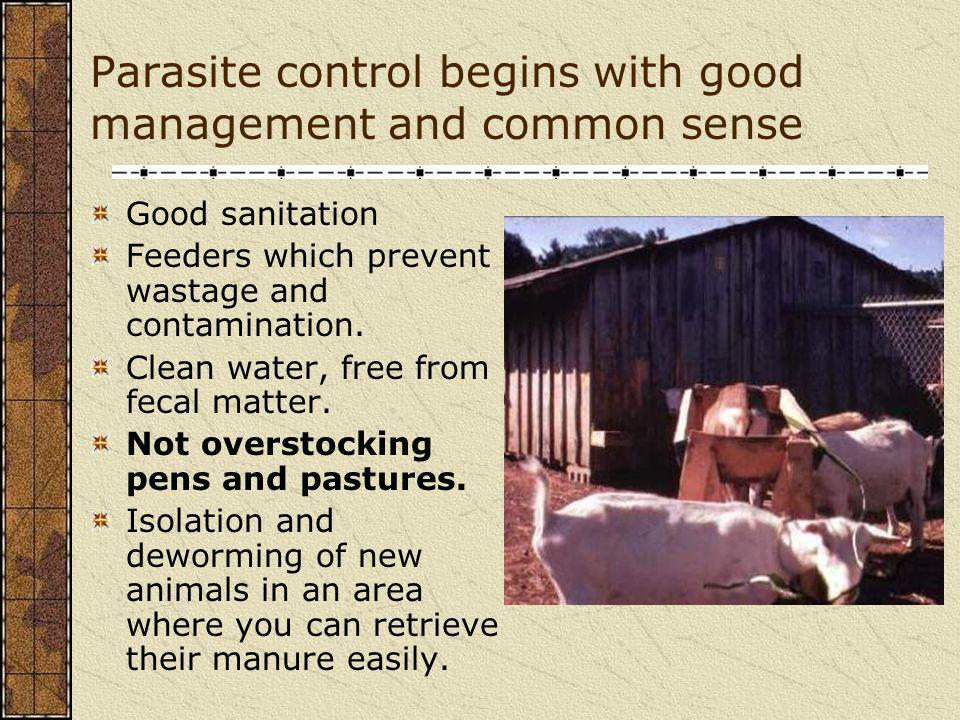Parasite control begins with good management and common sense