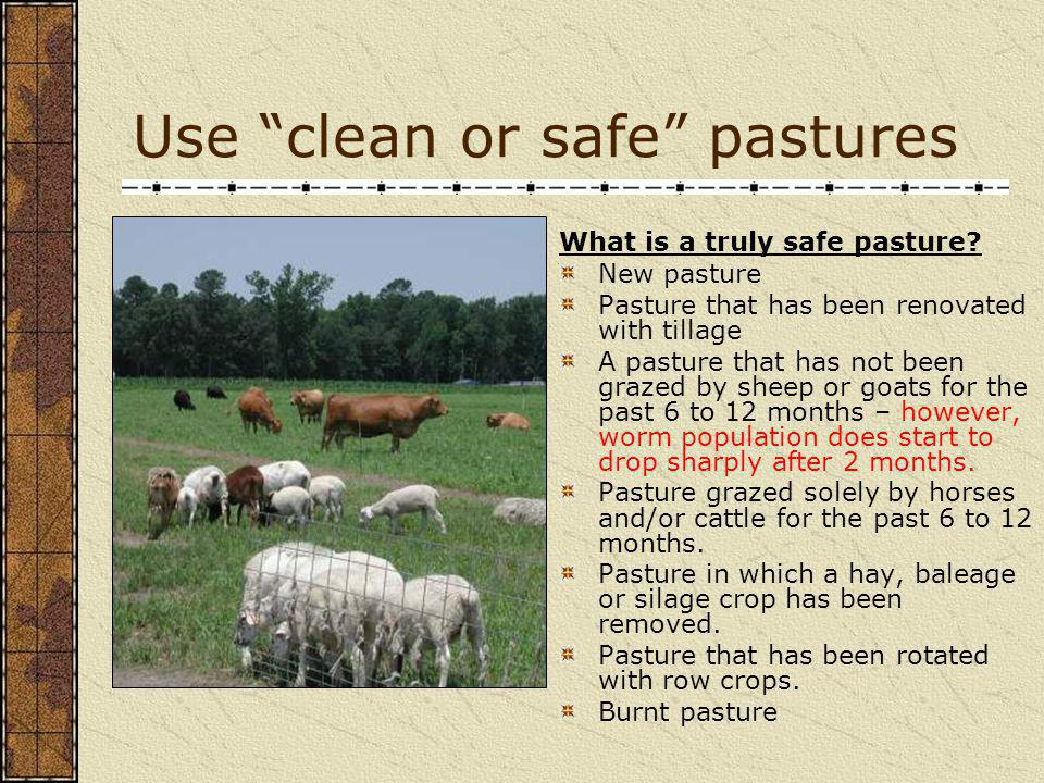 Use clean or safe pastures