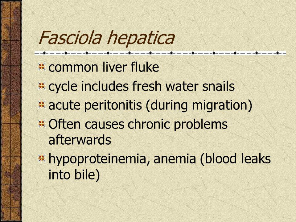 Fasciola hepatica common liver fluke cycle includes fresh water snails