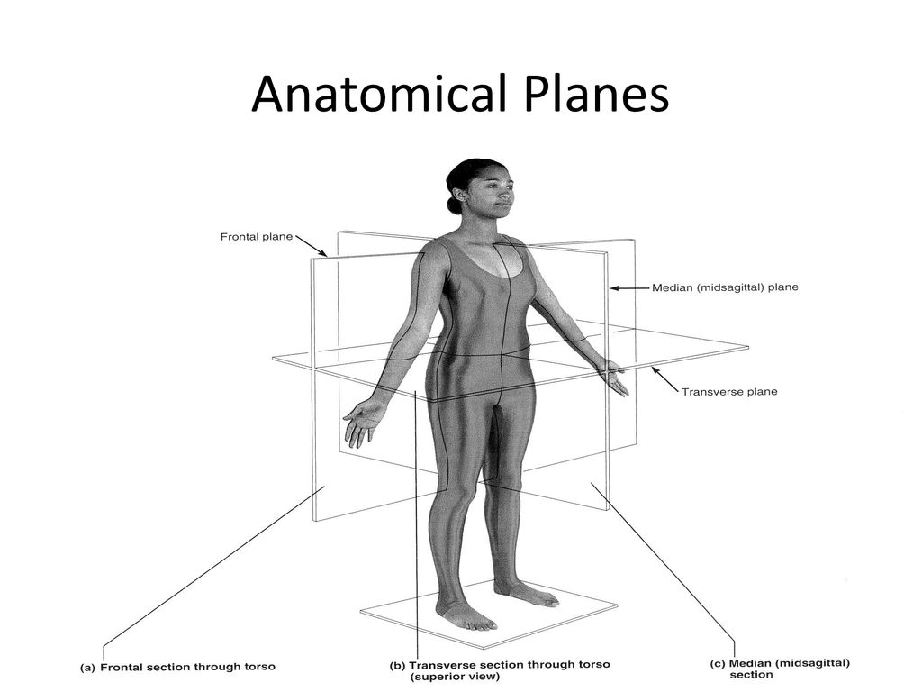 anatomical planes and axis