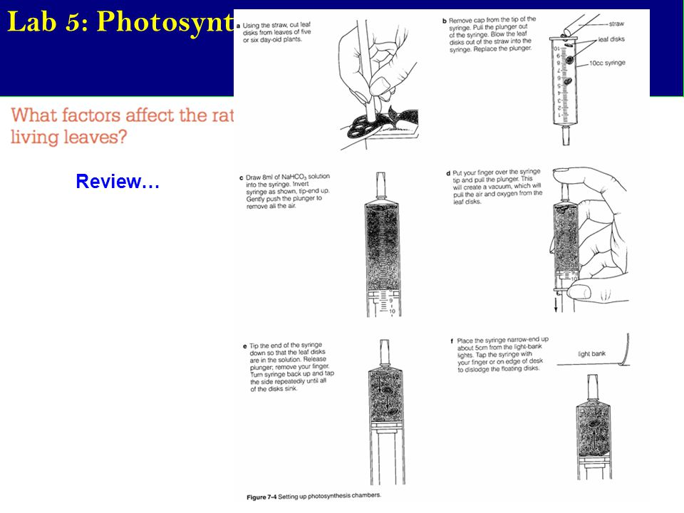Lab 5: Photosynthesis Review…