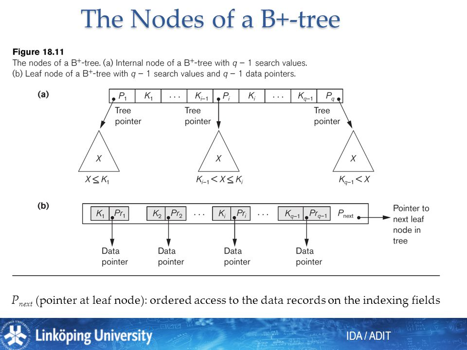 The Nodes of a B+-tree Pnext (pointer at leaf node): ordered access to the data records on the indexing fields.